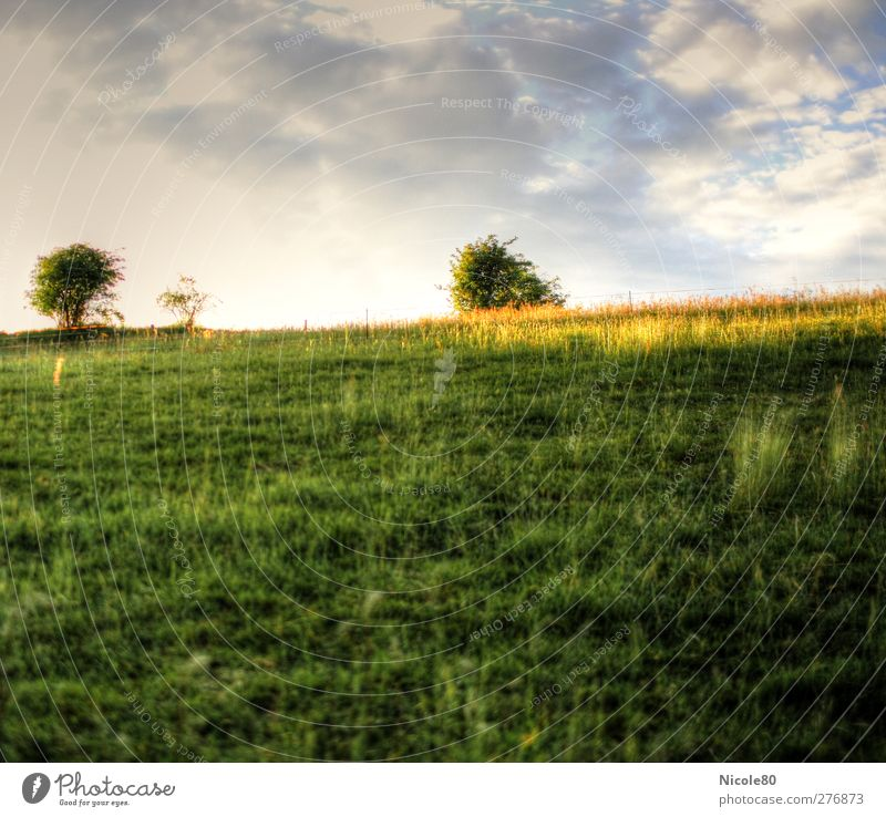 meadow Environment Sky Summer Meadow Field Green HDR Colour photo Exterior shot Deserted Copy Space top Copy Space bottom Day