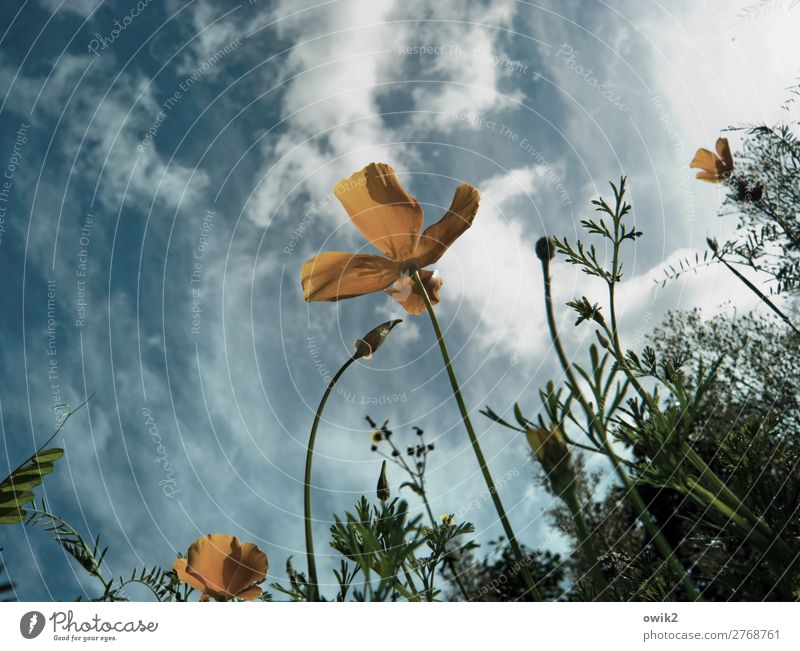 Fly me to the poppy seed Environment Nature Landscape Plant Air Sky Clouds Spring Beautiful weather Flower Bushes Blossom Garden Meadow Movement Blossoming
