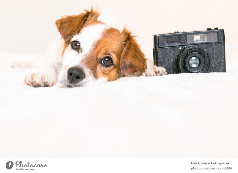 closeup portrait of cute dog with camera Lifestyle Leisure and hobbies House (Residential Structure) Bed Bedroom Camera Animal Pet Dog 1 Observe To enjoy Lie