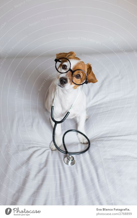 Portrait of a cute doctor dog sitting on bed Dog Beautiful White House (Residential Structure) Animal Joy Healthy Lifestyle Funny Health care Small Brown Think