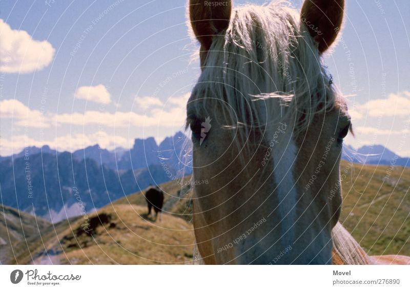 Sky Vacation & Travel Summer Animal Clouds Landscape Meadow Mountain Lanes & trails Horizon Wild animal Hiking Alps Horse Curiosity Italy