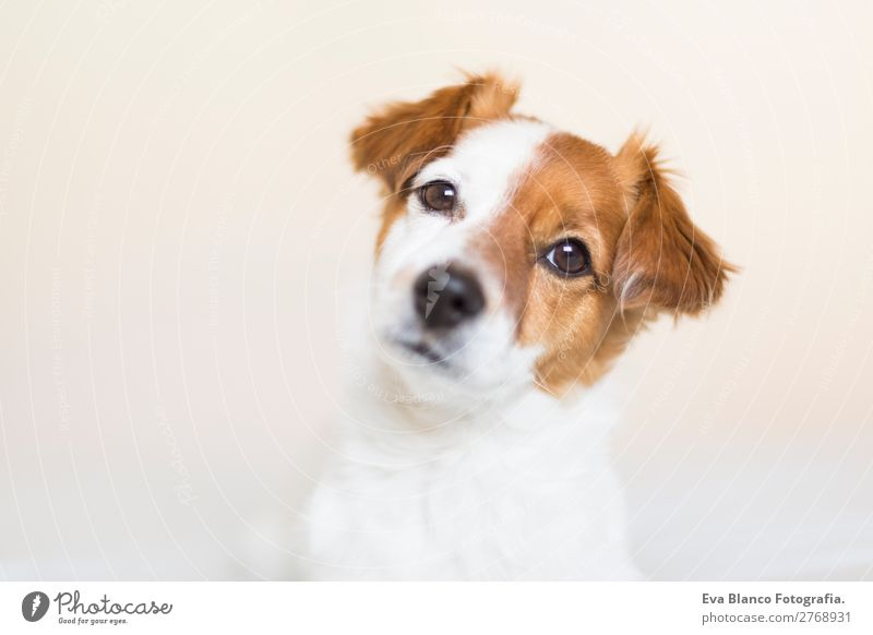 portrait of a cute dog resting on bed. Lifestyle Leisure and hobbies Flat (apartment) House (Residential Structure) Bed Room Animal Pet Dog 1 Observe Looking
