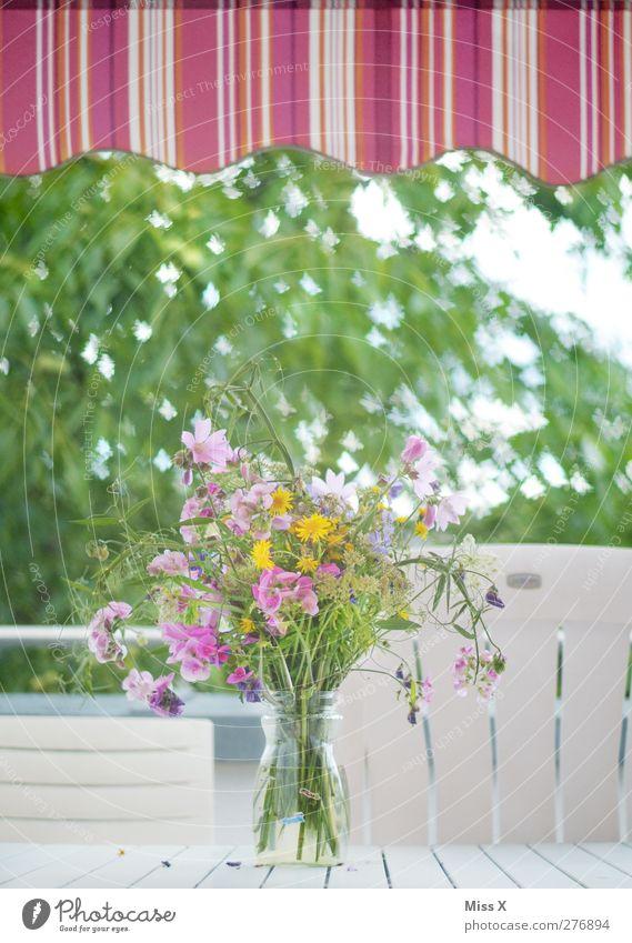 summer place Chair Table Spring Summer Flower Balcony Terrace Garden Butterfly Flock Blossoming Fragrance Flying Pink Bouquet Flower vase Sun blind Blur