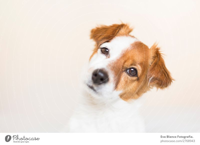 portrait of a cute dog on bed Lifestyle Leisure and hobbies Living or residing Bed House (Residential Structure) Animal Pet Dog 1 Observe Think Looking Sleep