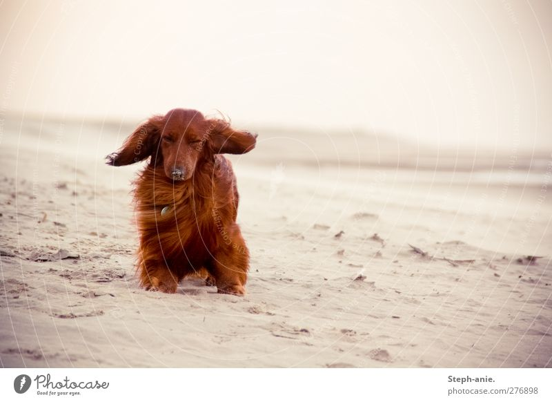 Dog Summer Ocean Beach Animal Coast Sadness Funny Wind Sit Island Authentic Stand Cute Uniqueness North Sea