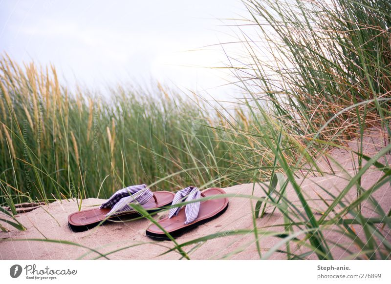 Lonely shoes Sand Sky Clouds Grass Marram grass Beach dune North Sea Baltic Sea Fashion Footwear Flip-flops Discover Relaxation To enjoy Crouch Lie Sleep Stand