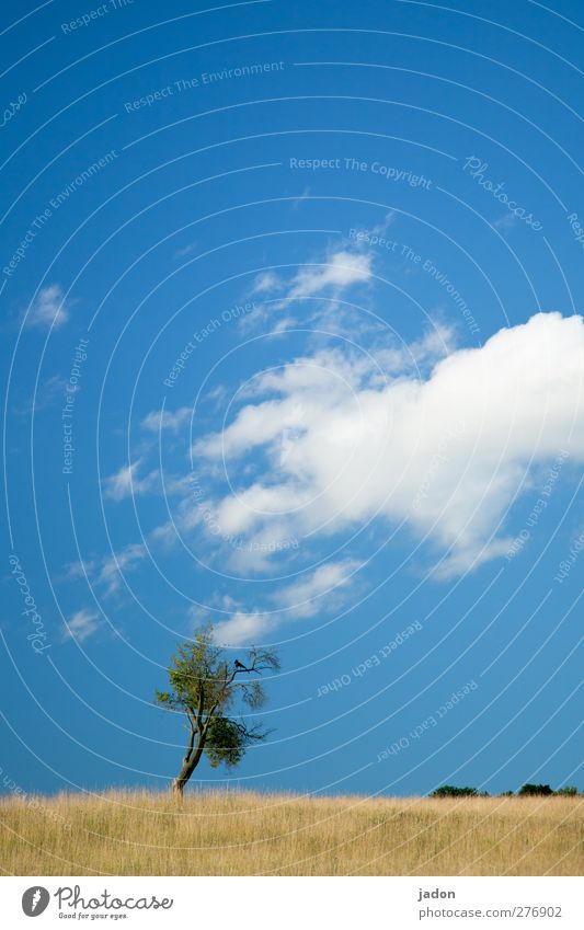 Sky Nature Blue Tree Plant Loneliness Animal Clouds Landscape Grass Bird Contentment Field Signs and labeling Hiking Free