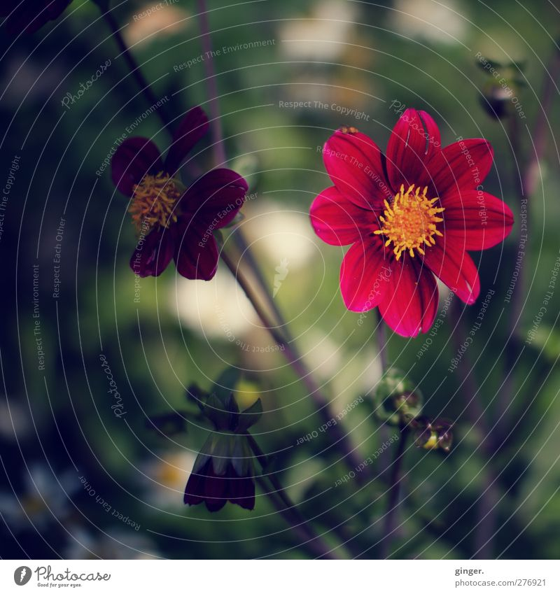 Nature Green Red Plant Flower Leaf Environment Dark Blossom Bright Lighting Round Patch Agricultural crop Unfolded
