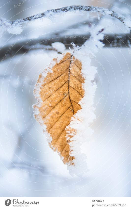 Nature Plant Water Leaf Forest Winter Environment Cold Snow Park Ice Weather Climate Frost Twig Rachis
