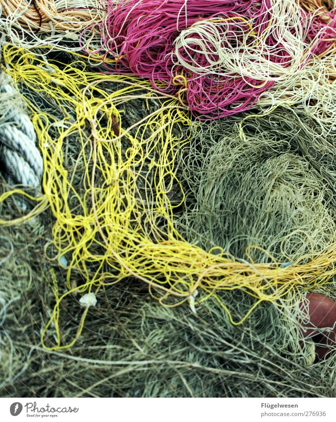 network discovery Fishery Fishing net Net Reticular Network Colour photo Exterior shot Day