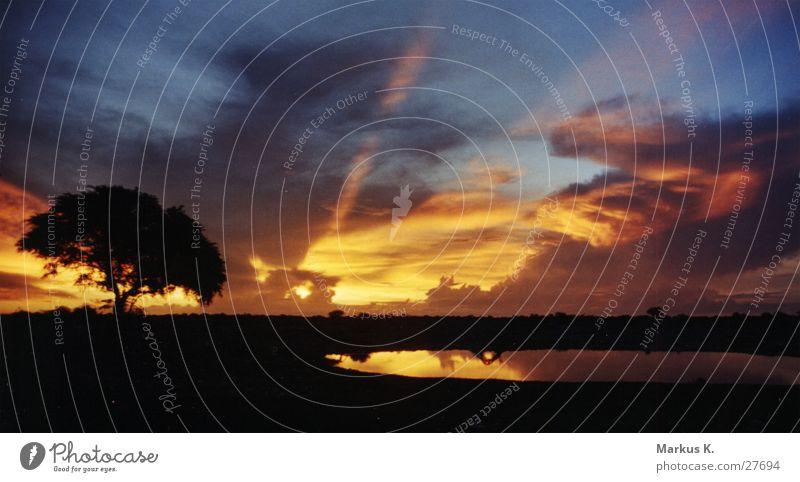 Sunset at the waterhole (2) Play of colours Night Watering Hole Tree Calm Africa Namibia Etosha pan Munich Sky Graffiti
