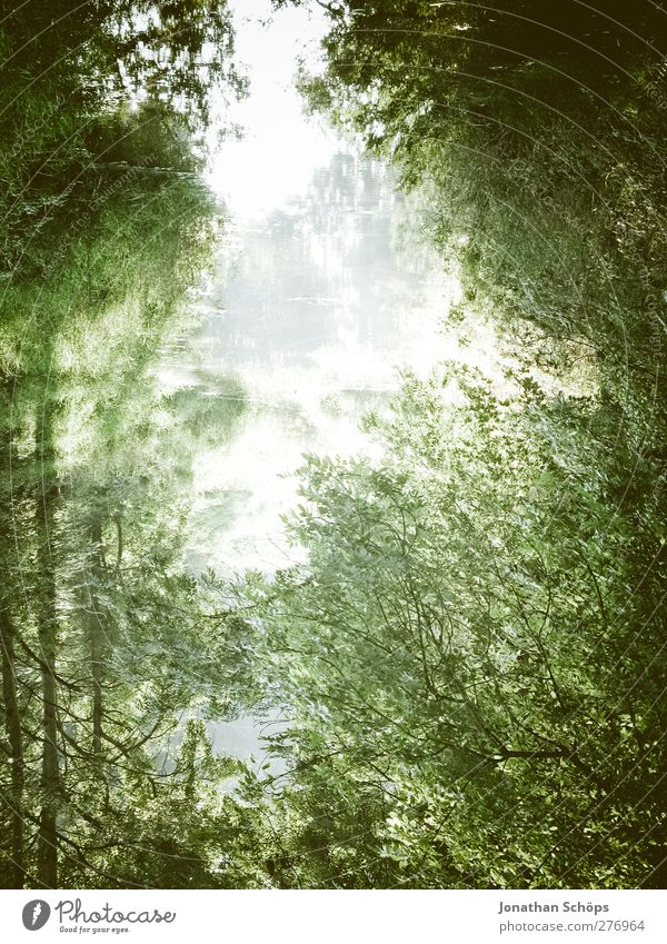 mirrored Environment Nature Plant Water Sky Tree Esthetic Emotions Contentment Forest River Lake Mirror image Reflection Unclear River bank Idyll