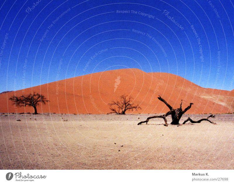 Dune 45 (2) Red Tree Dull Africa Hot Physics Dry Munich Beach dune Desert Sand Blue Dried Death Namib desert Warmth Thirst
