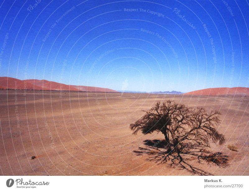 Tree Blue Red Far-off places Warmth Africa Desert Munich Physics Hot Dry Thirst Namib desert