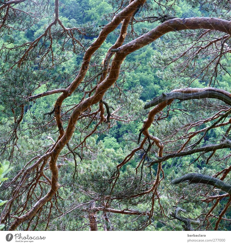 nightmare Nature Landscape Tree Pine Forest Swabian Jura Line Dark Many Wild Brown Green Power Loneliness Bizarre Energy Relaxation Freedom Mysterious Senses