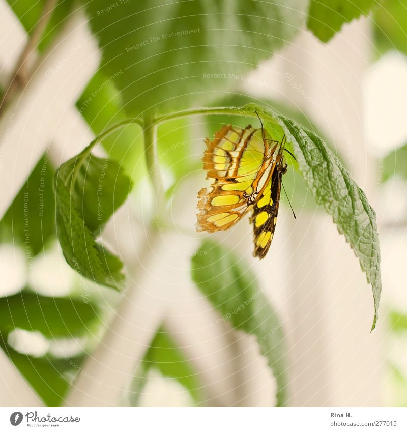 butterfly Plant Bushes Leaf Butterfly 1 Animal Hang Bright Yellow Green Colour photo Deserted Shallow depth of field