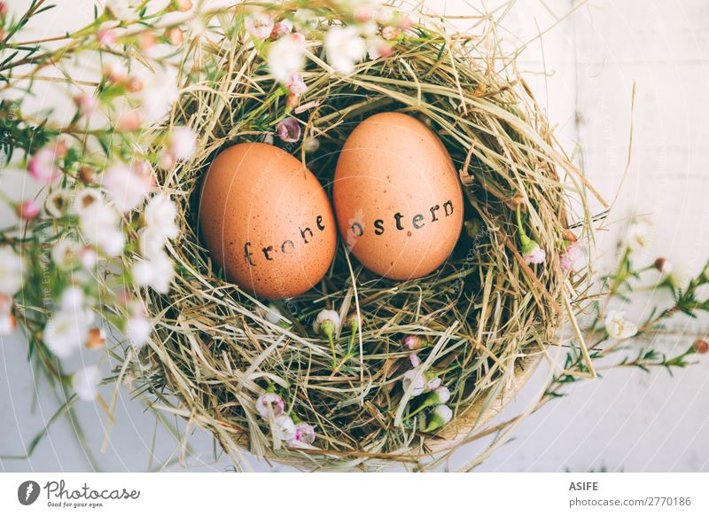 Easter eggs with stamped greeting text in german Beautiful Handcrafts Decoration Flower Grass Wood Ornament Funny Natural Cute Original White Tradition Egg