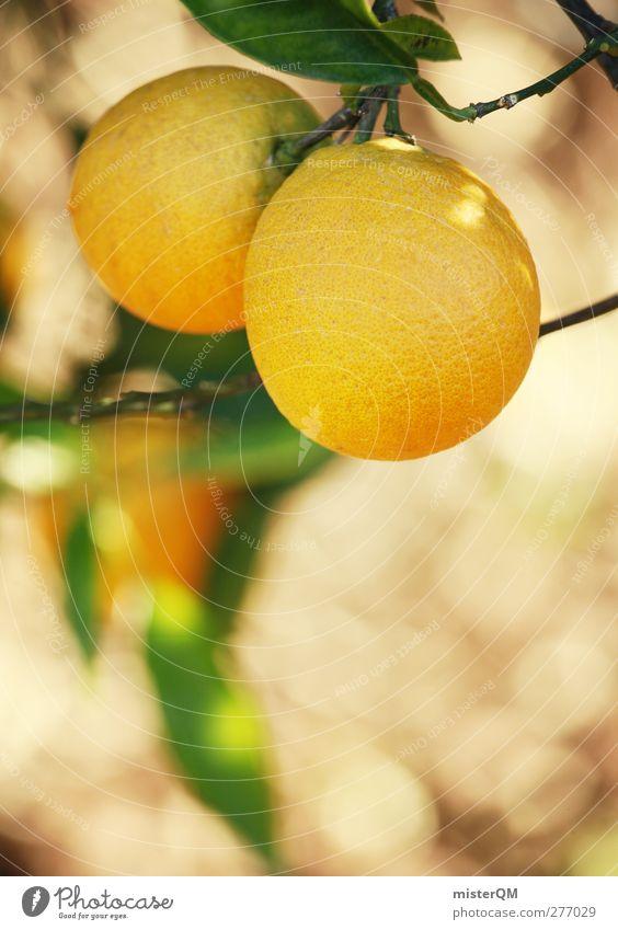 Orange Garden XII Environment Nature Landscape Plant Esthetic Orange juice Orange peel Orange tree Orange plantation Orange tea Yellow 2 Fruit Fruit trees