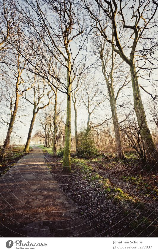 Nature Tree Plant Winter Forest Relaxation Landscape Environment Emotions Spring Lanes & trails Park Contentment Hiking Esthetic To go for a walk