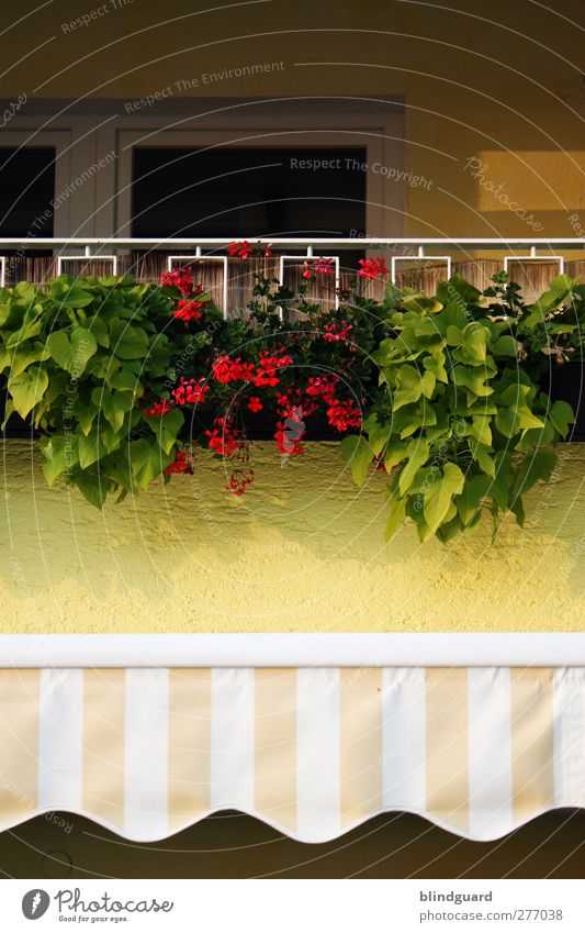 Summer in the city Flower Leaf Blossom Foliage plant Pot plant House (Residential Structure) Wall (barrier) Wall (building) Facade Balcony Door Decoration Stone