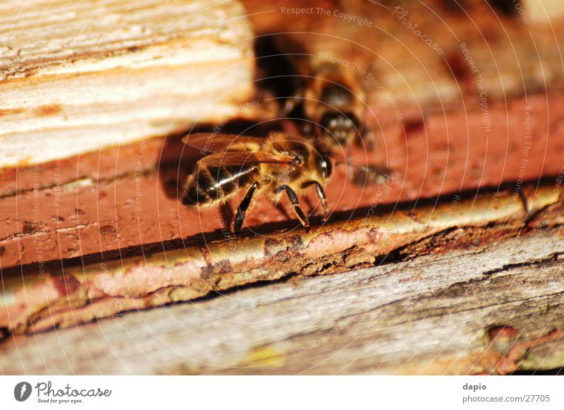 Chating Bees Beehive Working man Detail beekeeping