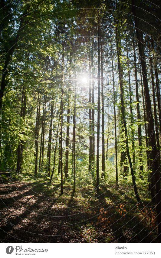 forest light Harmonious Well-being Contentment Relaxation Calm Trip Environment Nature Landscape Plant Earth Sun Sunlight Spring Summer Climate