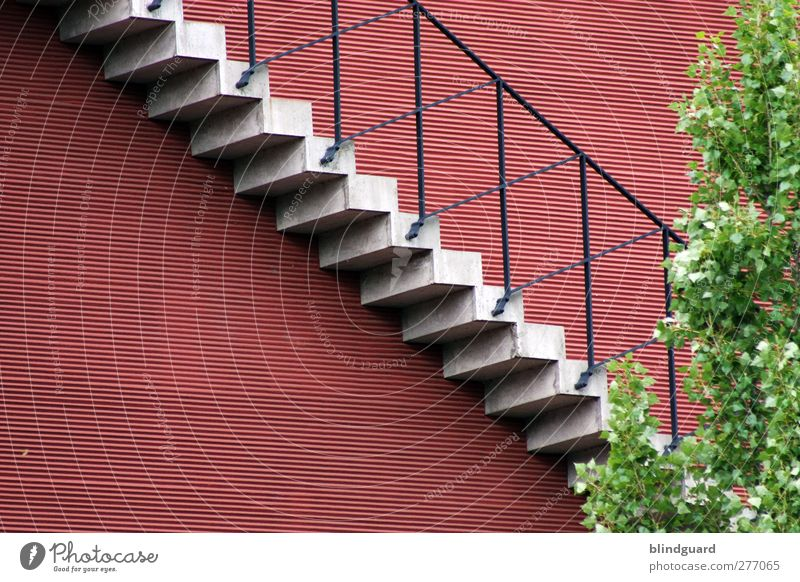 Stairway Tree Leaf Town Deserted House (Residential Structure) Manmade structures Building Architecture Wall (barrier) Wall (building) Stairs Facade Stone
