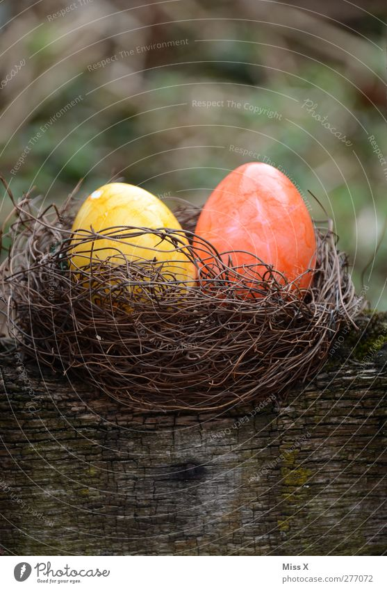 lair Food Nutrition Easter Round Yellow Easter egg nest Nest Orange 2 Wood Egg Colour Painted Hide Hiding place Colour photo Multicoloured Exterior shot