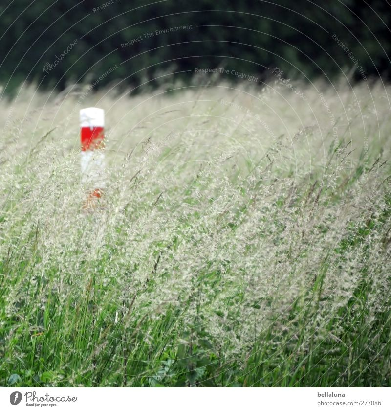 Nature White Green Summer Red Plant Environment Meadow Grass Spring Garden Park Field Column Pole Wild plant