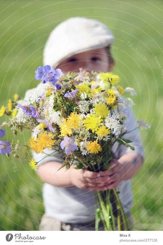 Human being Child Summer Plant Flower Love Meadow Emotions Spring Small Blossom Infancy Masculine Happiness Gift Beautiful weather