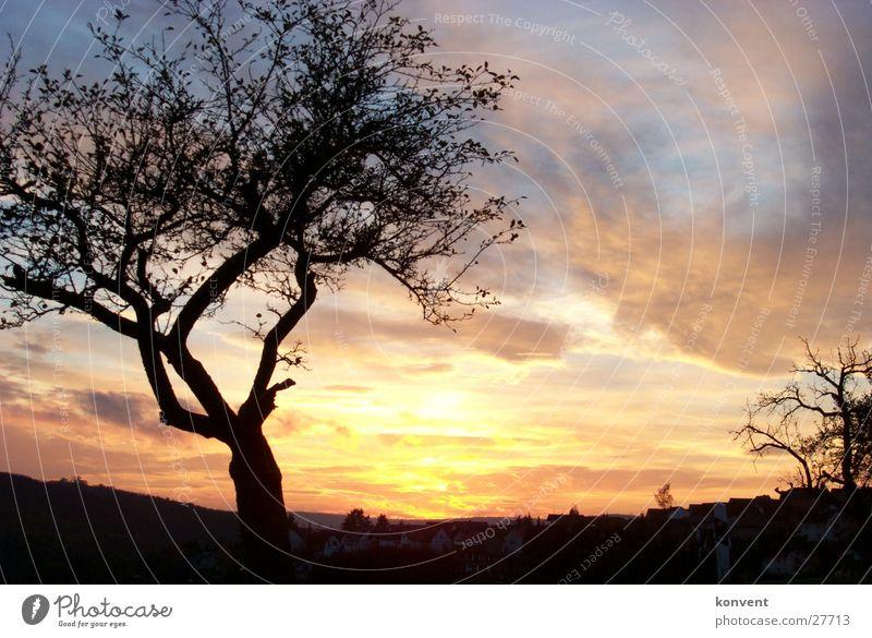 Nature Tree Autumn Moody Sunset
