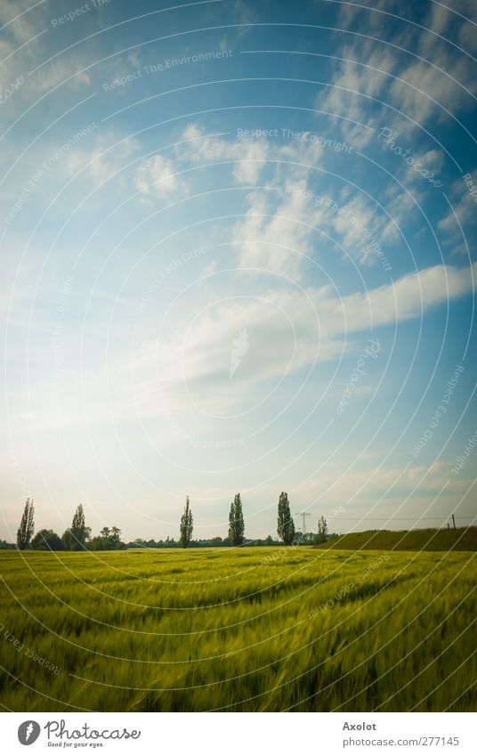 The green wheat field Landscape Air Sky Clouds Sunlight Summer Beautiful weather Field Free Bright Warmth Freedom Idyll Sustainability Nature Environment Wheat