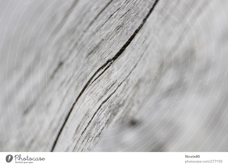 Nature Wood Gray Background picture Copy Space Crack & Rip & Tear Wood grain Gray scale value Life line Log Wood fiber