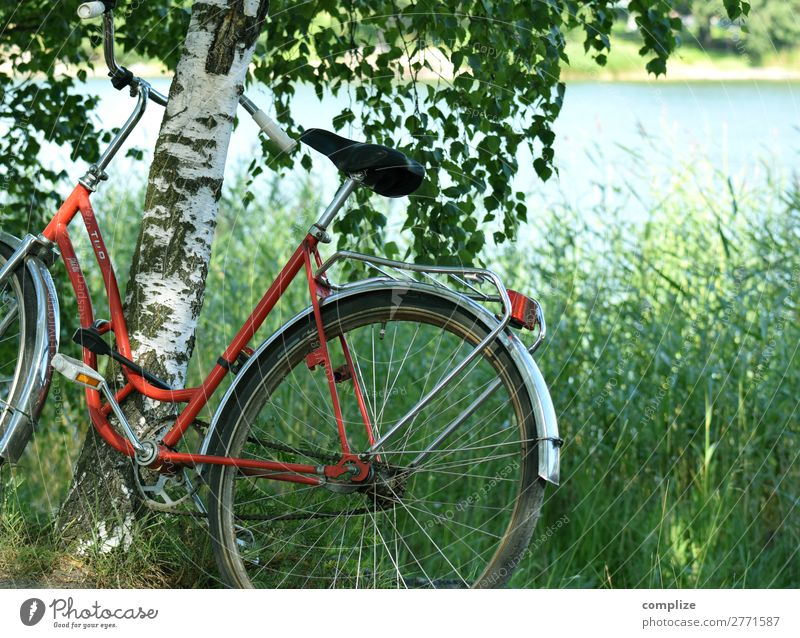 Bicycle stands leaning against birch tree at the lake in Finland Lifestyle Wellness Leisure and hobbies Vacation & Travel Cycling tour Summer Summer vacation