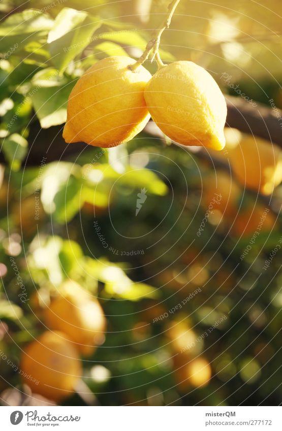 Orange Garden XIII Art Esthetic Lemon Lemon juice Lemon yellow Lemon tree Lemon peel Lemon leaf Yellow Plantation Extend Breed Vitamin Vitamin C Colour photo