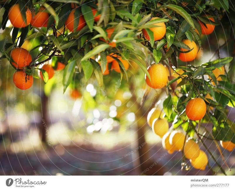 Orange Garden XIV Esthetic Orange tree Orange plantation Tree Fruit Healthy Ecological Vitamin C Mediterranean Tropical fruits Mature Leaf Many Vegetarian diet