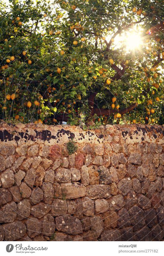 Orange Garden XV Environment Nature Landscape Plant Esthetic Wall (barrier) Lemon Lemon juice Lemon yellow Lemon tree Lemon leaf Mediterranean Spain Majorca