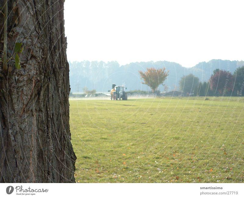 wax Tractor Field Meadow Tree bark Green