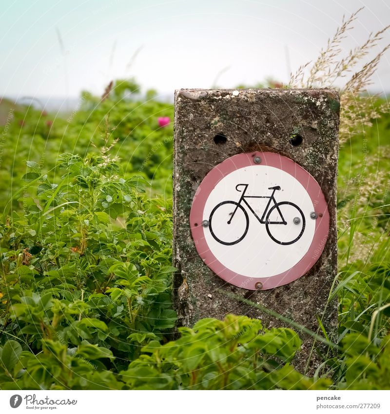 cykler forbudt Cycling Bicycle Nature Landscape Plant Wild plant Fjord Signs and labeling Signage Warning sign Road sign Hiking Green Denmark Jutland Limfjord