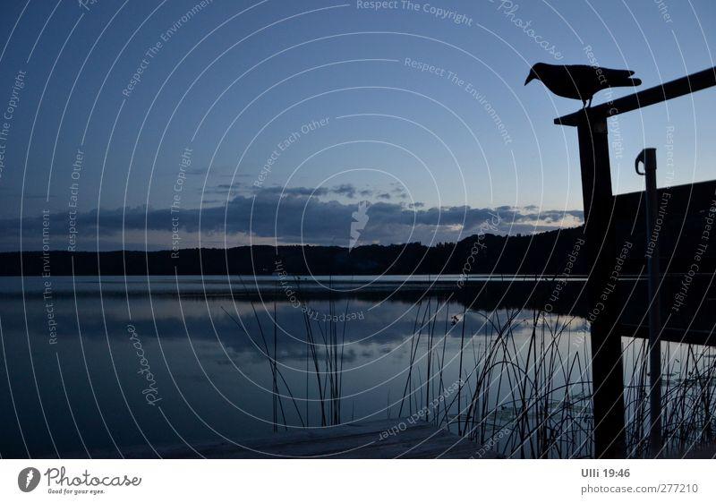 Sky Nature Blue Water Summer Loneliness Animal Calm Black Landscape Dark Gray Lake Dream Bird Horizon