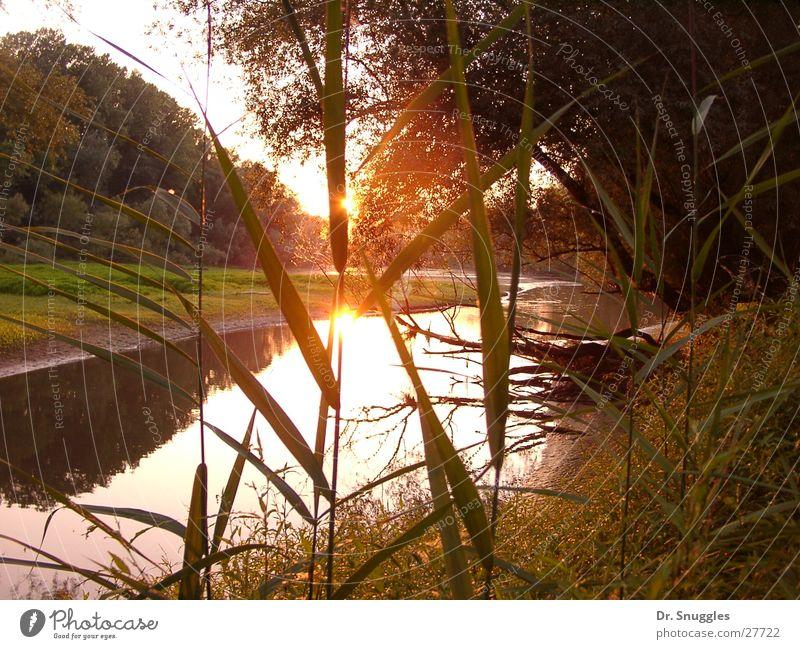 Water Sun Bonn Rhine Rhineland-Palatinate Backwater Rhein meadows Wörth am Rhein