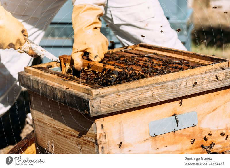 Beekeeper working collect honey. Bee-keeper Honeycomb Bee-keeping Apiary Beehive Farm