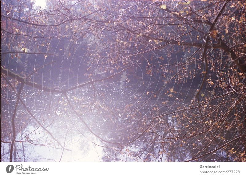 Nature Tree Forest Environment Autumn Lake Bright Autumnal Twigs and branches Forest lake