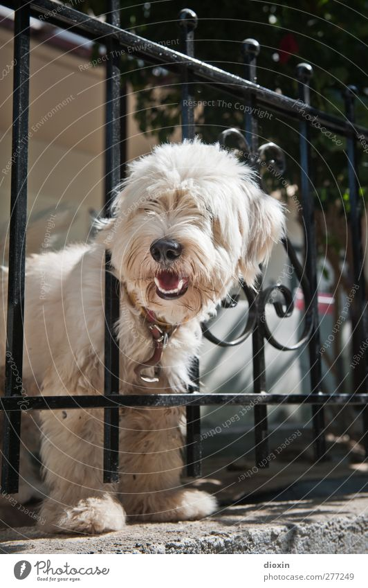 Cretan Chaindog Fence Animal Pet Dog 1 Cuddly Watchdog Testing & Control Protection Looking Colour photo Exterior shot Deserted Copy Space top Day