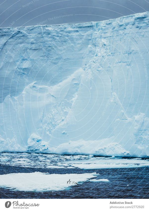 Wall of glacier in sea Glacier Wall (building) Ice Penguin Ocean Iceberg Landscape Dramatic Environment huge Beauty Photography Water polar North The Arctic