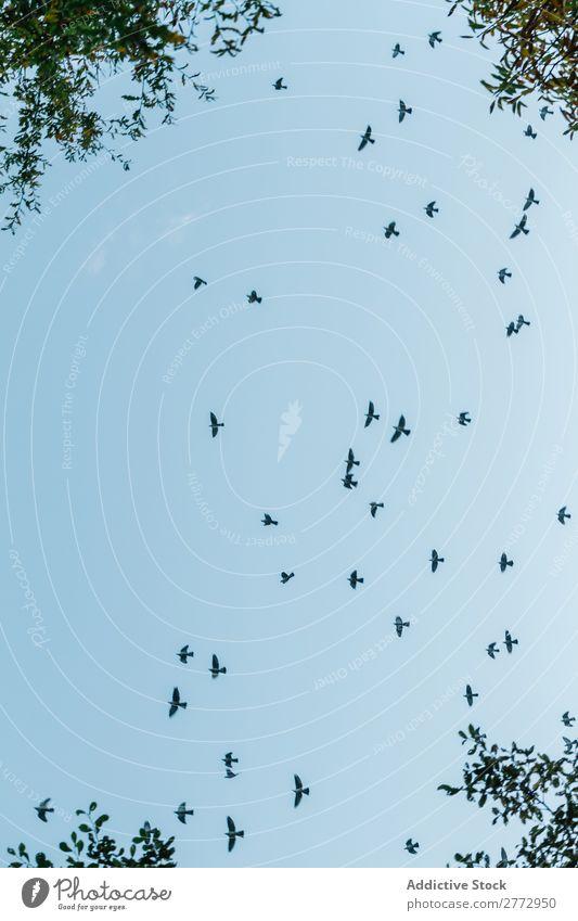 Black birds on blue sky Sky Bird Freedom Flying Silhouette Flock Nature Peace