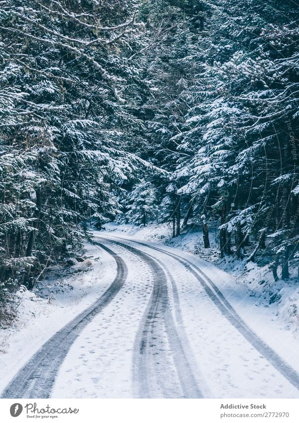 Snowy road in woods Forest Street Landscape Magic Serene Rural Seasons Environment Nature Park Vacation & Travel pathway Deserted curvy Empty Natural Trip Curve