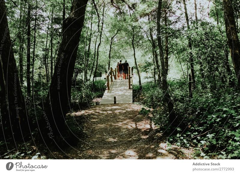 Bridge in forest Forest Human being Nature Landscape Green Tree
