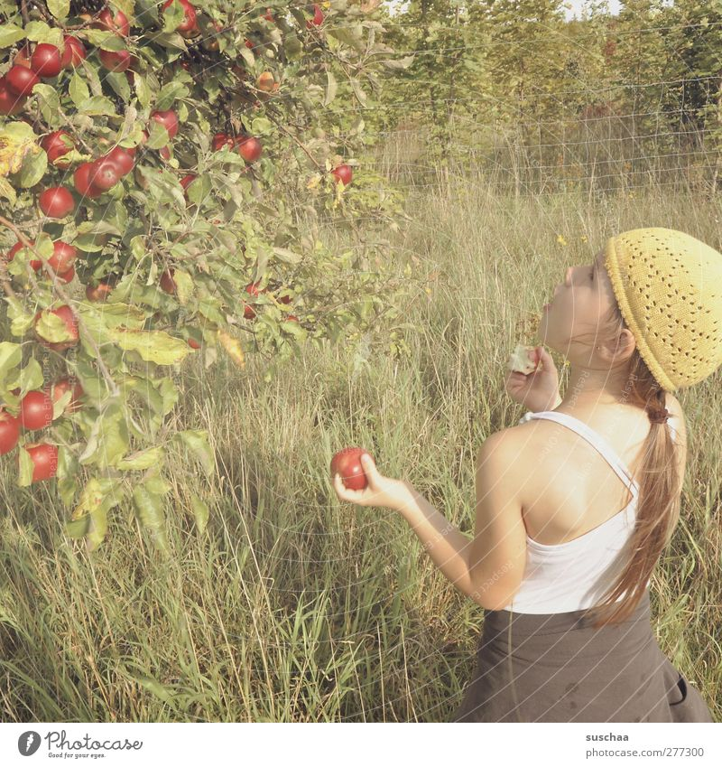 apple picker Feminine Child Girl Infancy Head Hair and hairstyles Face Ear Back Arm Hand 3 - 8 years Environment Nature Summer Beautiful weather Tree Grass