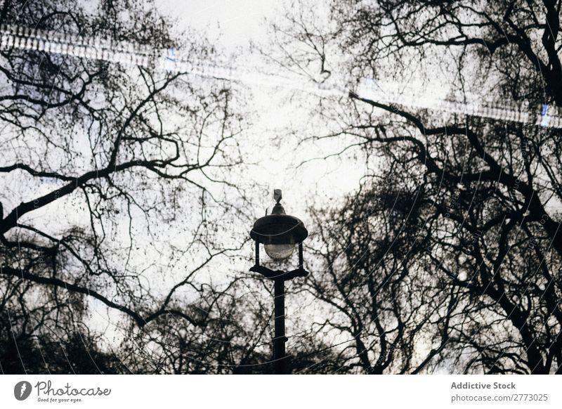 Lonely street lamp Light Lantern Town Evening Lamp Night Exterior shot Street Colorless Park Garden Deserted 1 Tree Plant sinister Forest Fog silence Bare